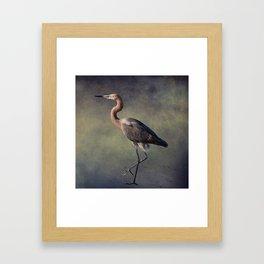 The Reddish Egret 1 Framed Art Print
