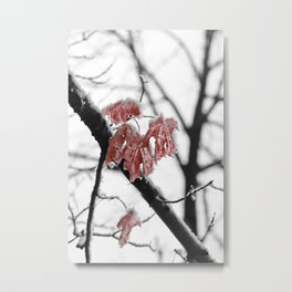 Scarlet Red Leaves in Winter Metal Print