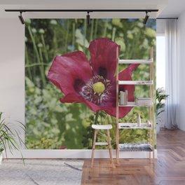 Pretty Purple Poppy Flower Wall Mural