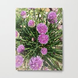 Botanicals Series - Chive me pretty up Close and personal Metal Print