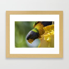 Tropical Delights Framed Art Print