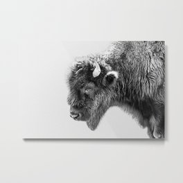 Bison Portrait | Black and White Metal Print