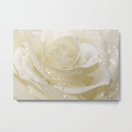 Rose white 01 Metal Print
