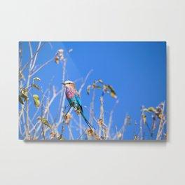 Beautiful Bird Metal Print
