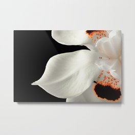 Egyptian Lilly Metal Print