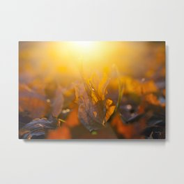 fallen leaves of a maple Metal Print