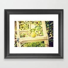 Fruit Pear in the Orchard Framed Art Print