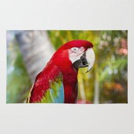 Green Winged Macaw Ara chloropterus Lahaina Maui Hawaii Rug