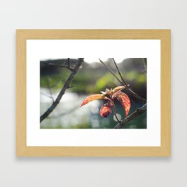 Goldenred Framed Art Print