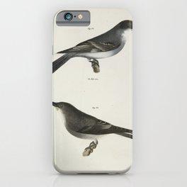 1299 72 The Kingbird (Tyrannus intrepidus) 73 The Olive sided Kingbird (Tyrannus cooperi)26 iPhone Case