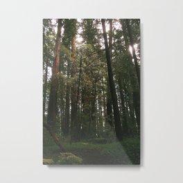 Redwood Fairy Tale Metal Print