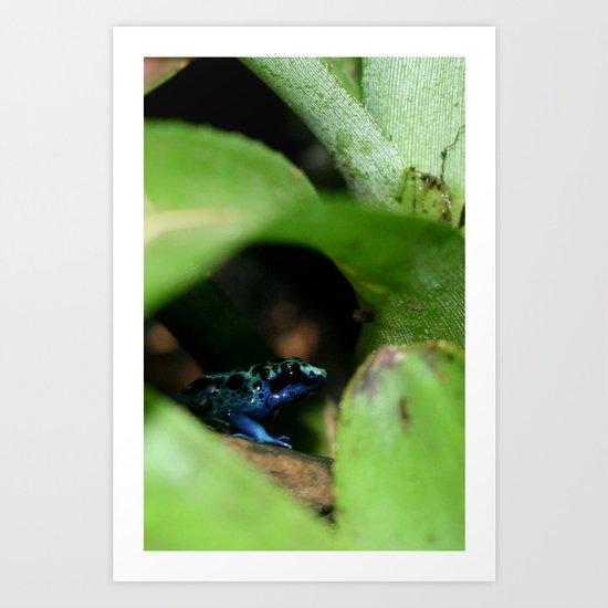 Poison Dart Frog- Dendrobates Azureus Art Print