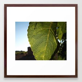 Blood fig Framed Art Print