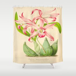 LAELIA AUTUMNALIS Vintage Botanical Floral Flower Plant Scientific Illustration Shower Curtain