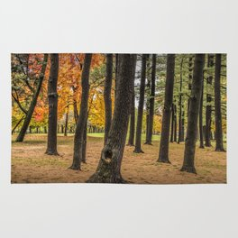 Fall City Park Scene in with Pine and Maple Trees Rug