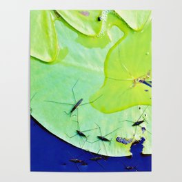 Water striders on lily pad Poster