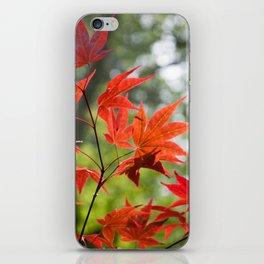 Sunlit Maples iPhone Skin