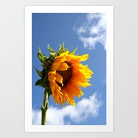 sunflower Art Prints featuring sunflower by Hannah