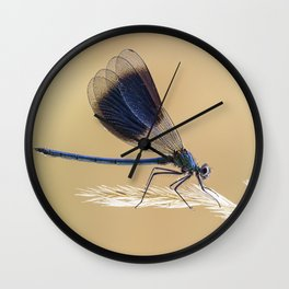 Banded Demioselle On Grass Wall Clock