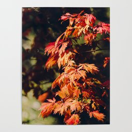 Moody Autumn Leaves 2 Poster