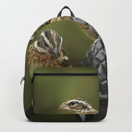 Grosbeaks Three Backpack