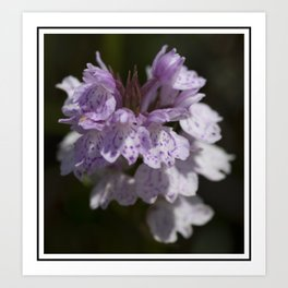 New Forest Marsh Orchid Art Print