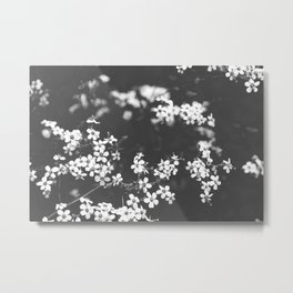 Little White Wildflowers Black and White Photography Metal Print