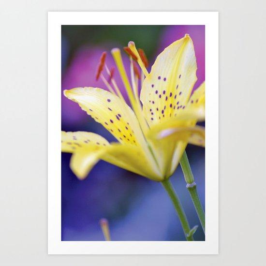 Lily / Lilium Flower Art Print