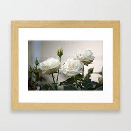 Longwood Gardens - Spring Series 77 Framed Art Print