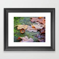 Shaking down the acorns Framed Art Print