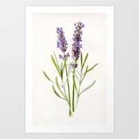 lavender Art Prints featuring Lavender by 83 Oranges™