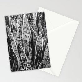 Plant Photography Tropical Exotic Plants Snake Plant Tongue Beauty Wild Nature Black and White Stationery Cards