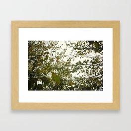 Up Through The Trees Framed Art Print