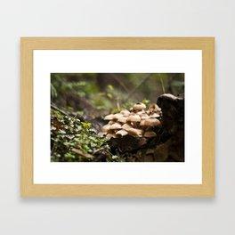 Wild Mushrooms Framed Art Print