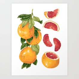 Blooming pomelo with fruits Art Print