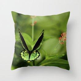 Birdwing Butterfly Throw Pillow