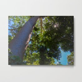 Sunlight In The Trees Metal Print