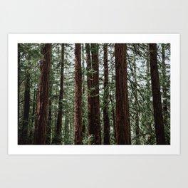 the woods. Art Print