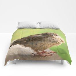 Baby Bird Comforters