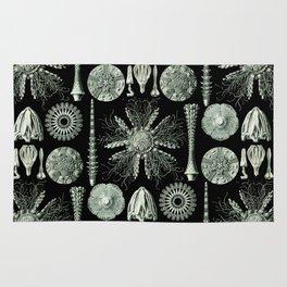 Ernst Haeckel - Scientific Illustration - Echinidea (Sea Urchins) Rug
