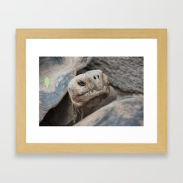 The ancient one Framed Art Print