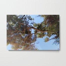Afternoon Tree Metal Print