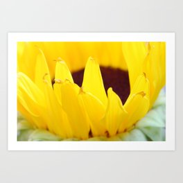 Sunflowers Face the Sun Art Print