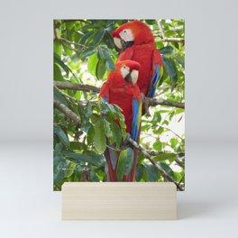 Colorful Macaw Couple Mini Art Print