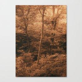 Blackford Hill. Silver Light Canvas Print