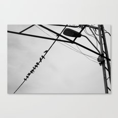 Chatter Canvas Print