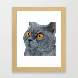 Blue British Shorthair cat Framed Art Print