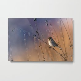 Into the reed Metal Print
