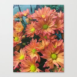 Cream and Pink watered Flowers Canvas Print