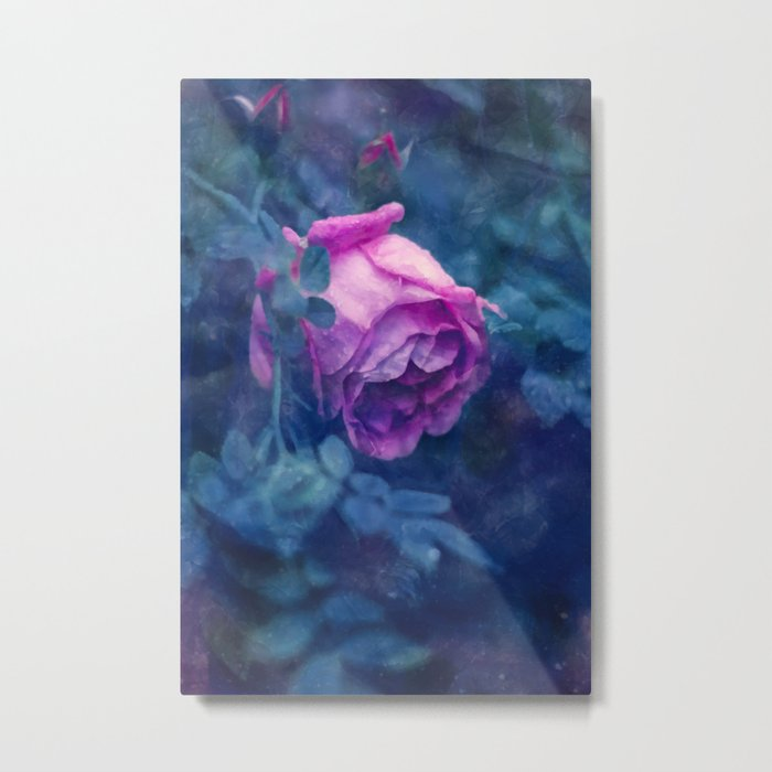 Blooming rose Metal Print